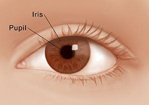 iris dan pupil mata