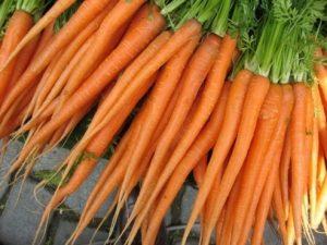 wortel-imperator