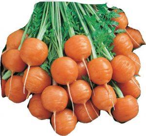wortel-mini