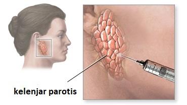 biopsi kelenjar ludah