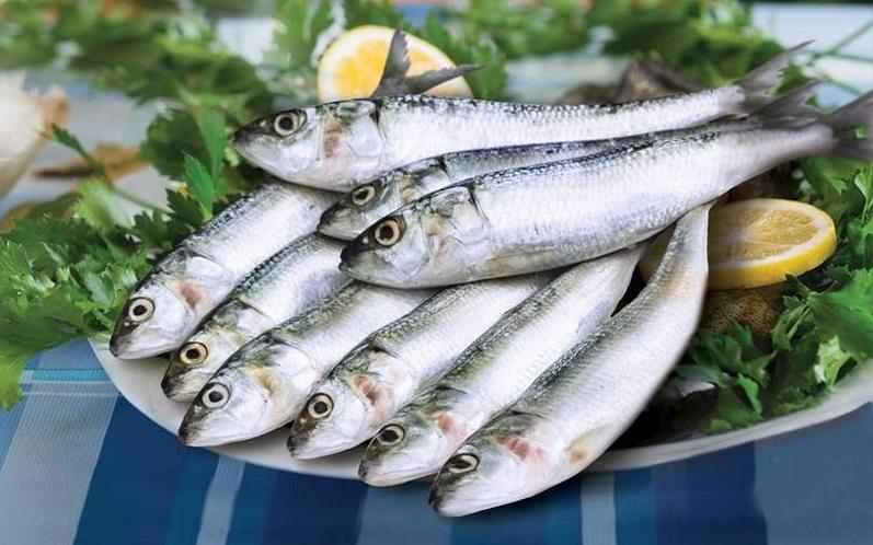 Kandungan Gizi dan Manfaat Ikan Sarden