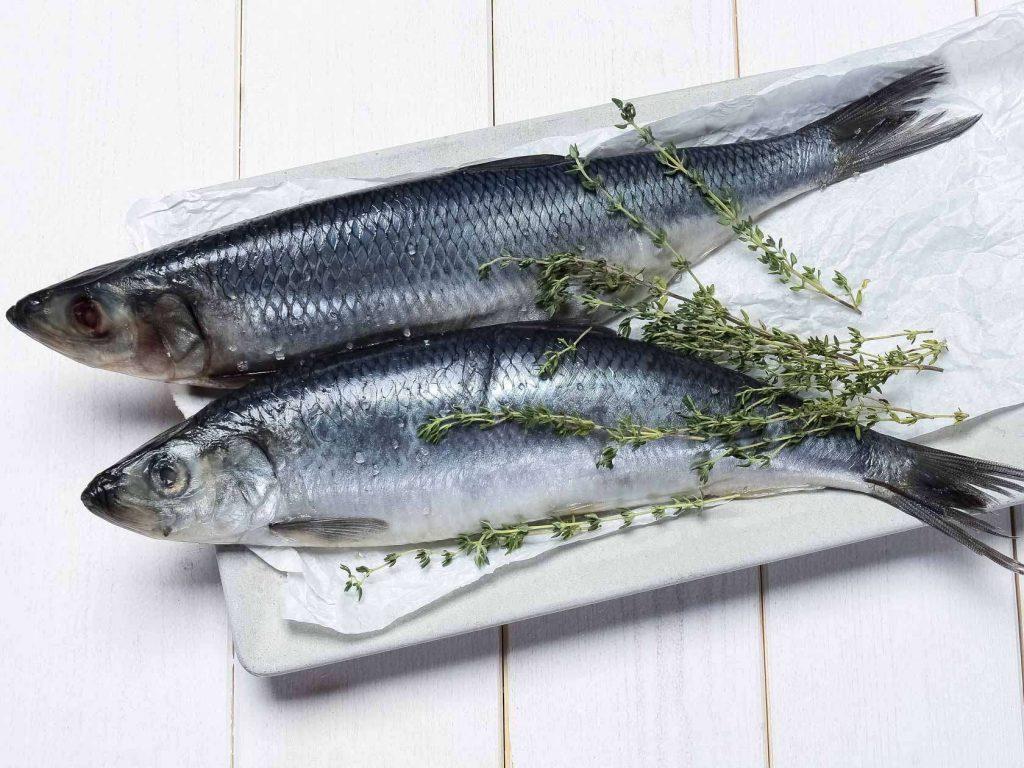 Kandungan Gizi Ikan Haring